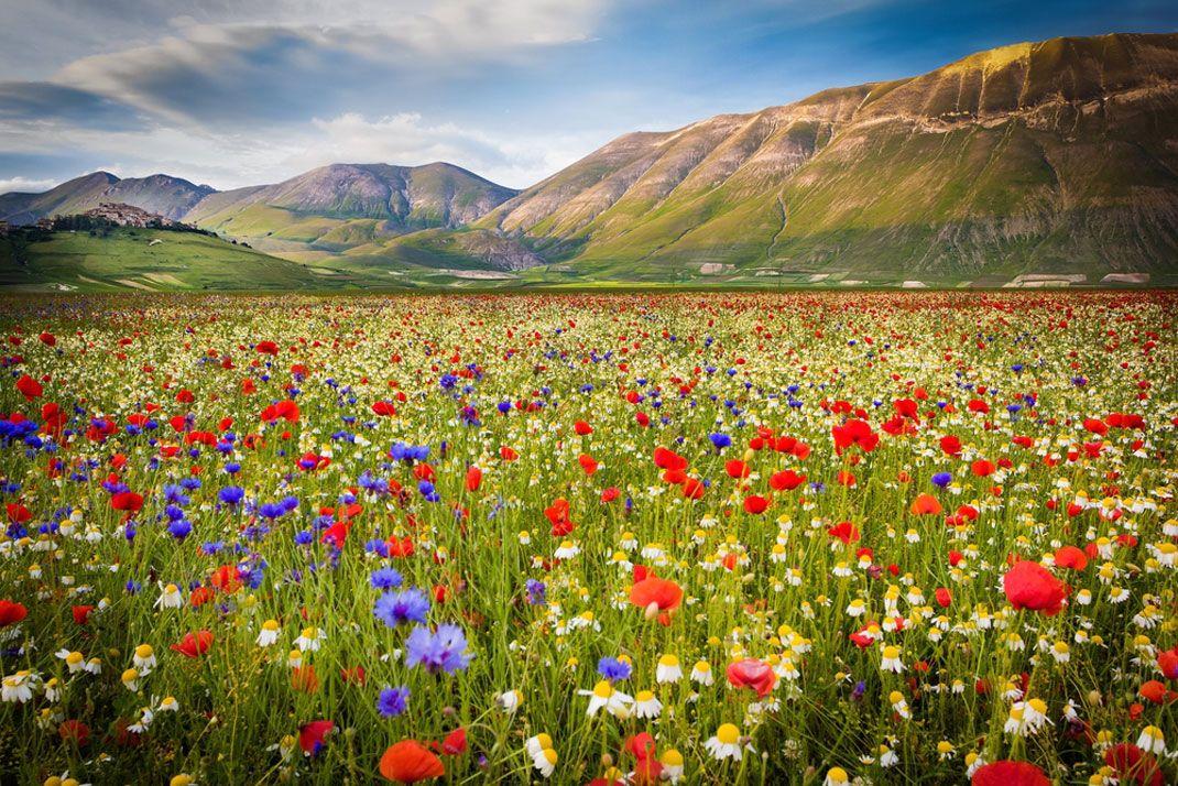 au c ur de l italie ces champs de fleurs color s sont un v ritable voyage pour vos sens lieux. Black Bedroom Furniture Sets. Home Design Ideas