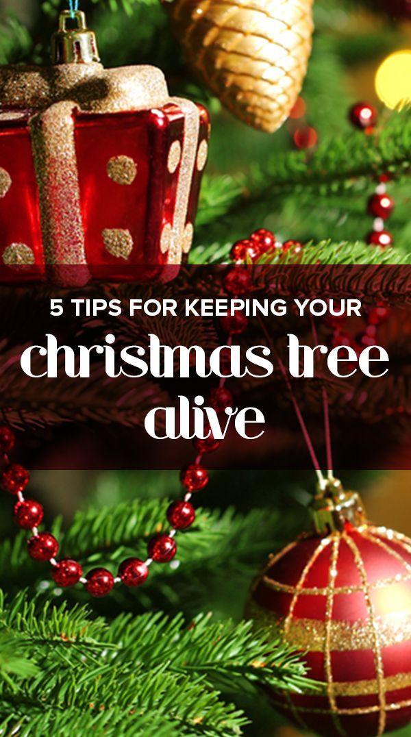 5 Tips To Keep Your Christmas Tree Alive Through The Holidays Holiday Recipes Christmas Christmas Tree Care Christmas