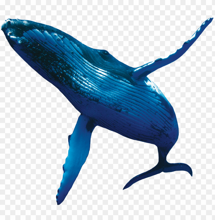 Humpback Whales Whale Png Image With Transparent Background Png Free Png Images Whale Humpback Whale Marine Animals