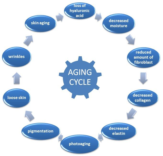 the aging process essay We will write a custom essay sample on aging process specifically for you.