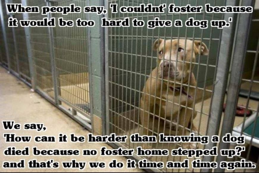 i couldn't foster Foster dog, The fosters, Dog died