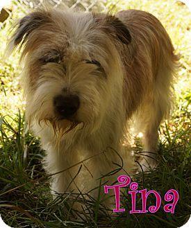 New Jersey Nj Wheaten Terrier English Sheepdog Mix Meet Nj Tina A Dog For Adoption Http Www Adoptapet Com Pet Wheaten Terrier Mix Terrier Terrier Mix