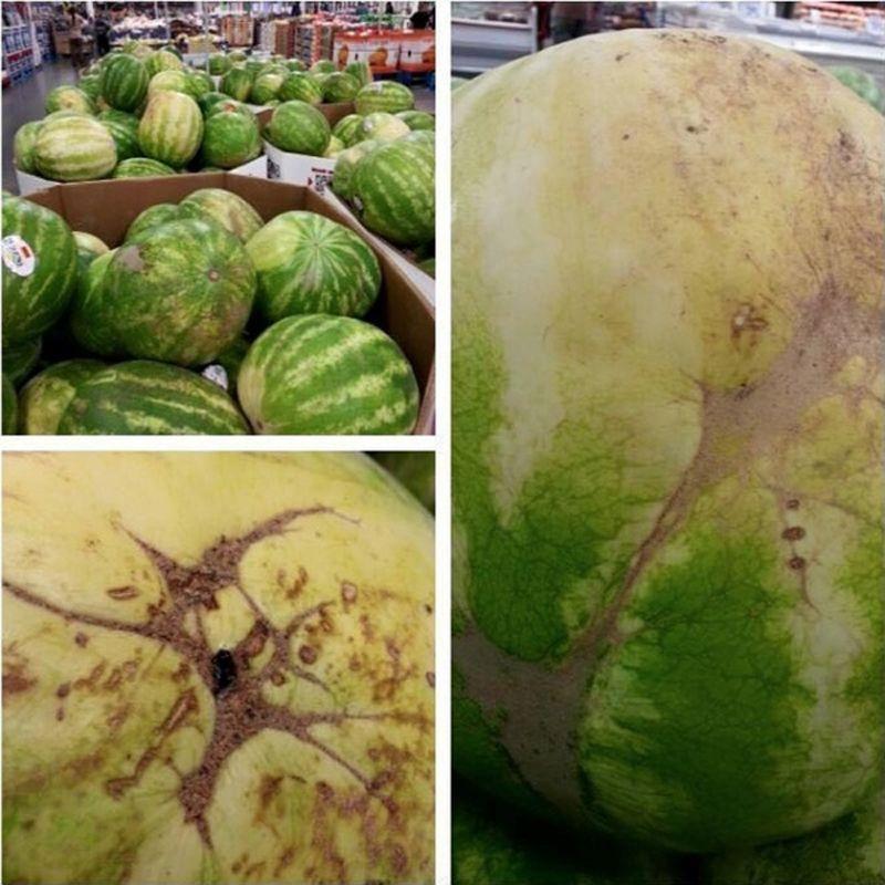 Wassermelone Risse