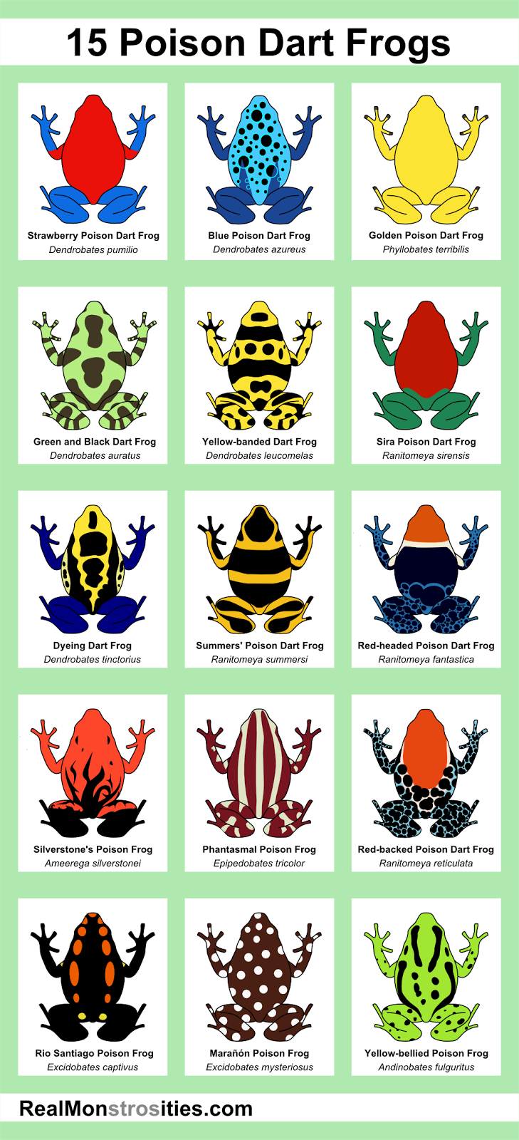 find this pin and more on for our pets real monstrosities 15 poison dart frogs