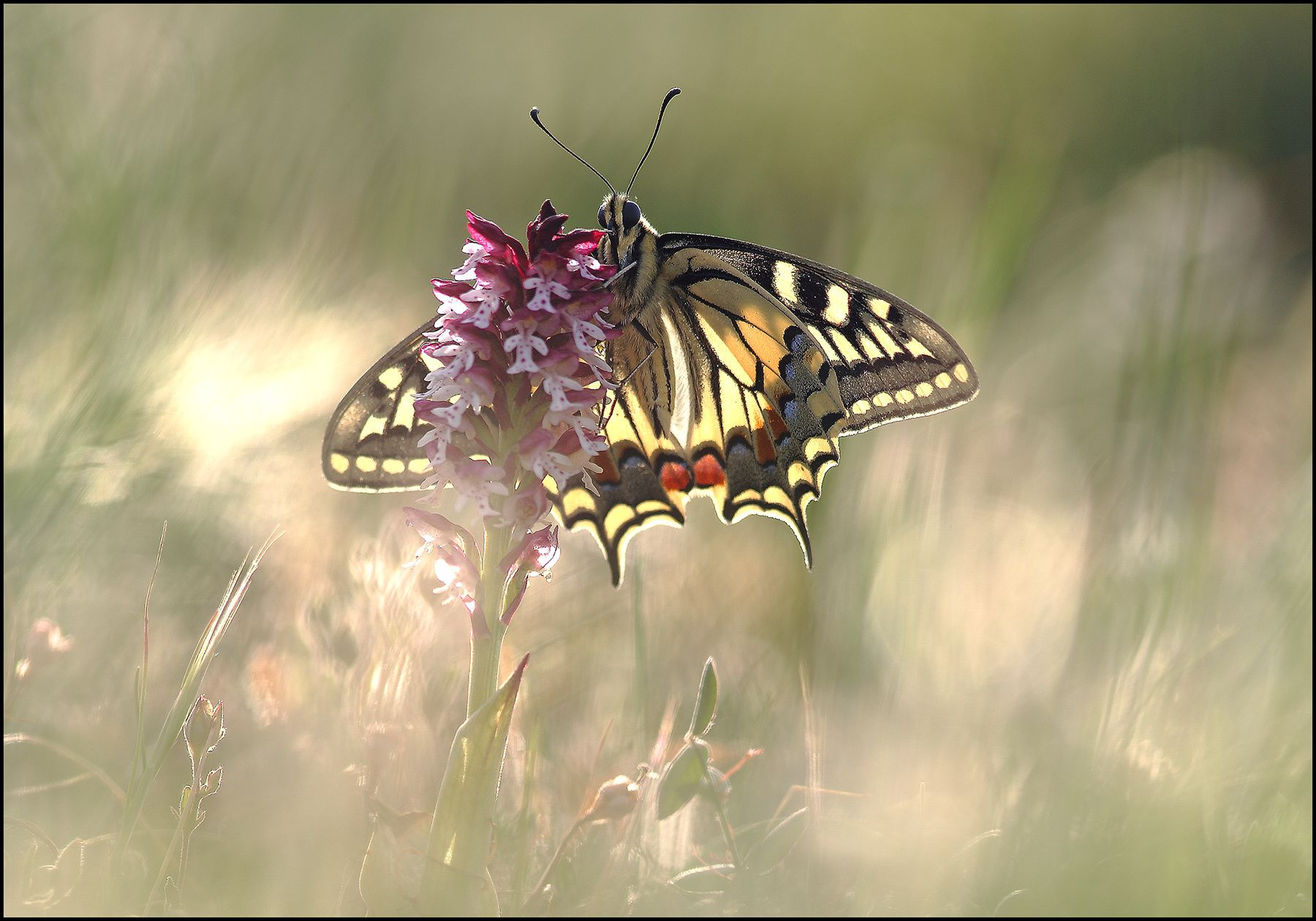 machaon by melchiorre pizzitola on 500px