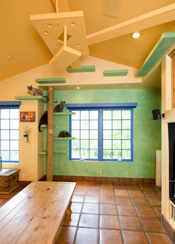 maison en paradis pour chat 7 35000$ pour transformer sa maison en