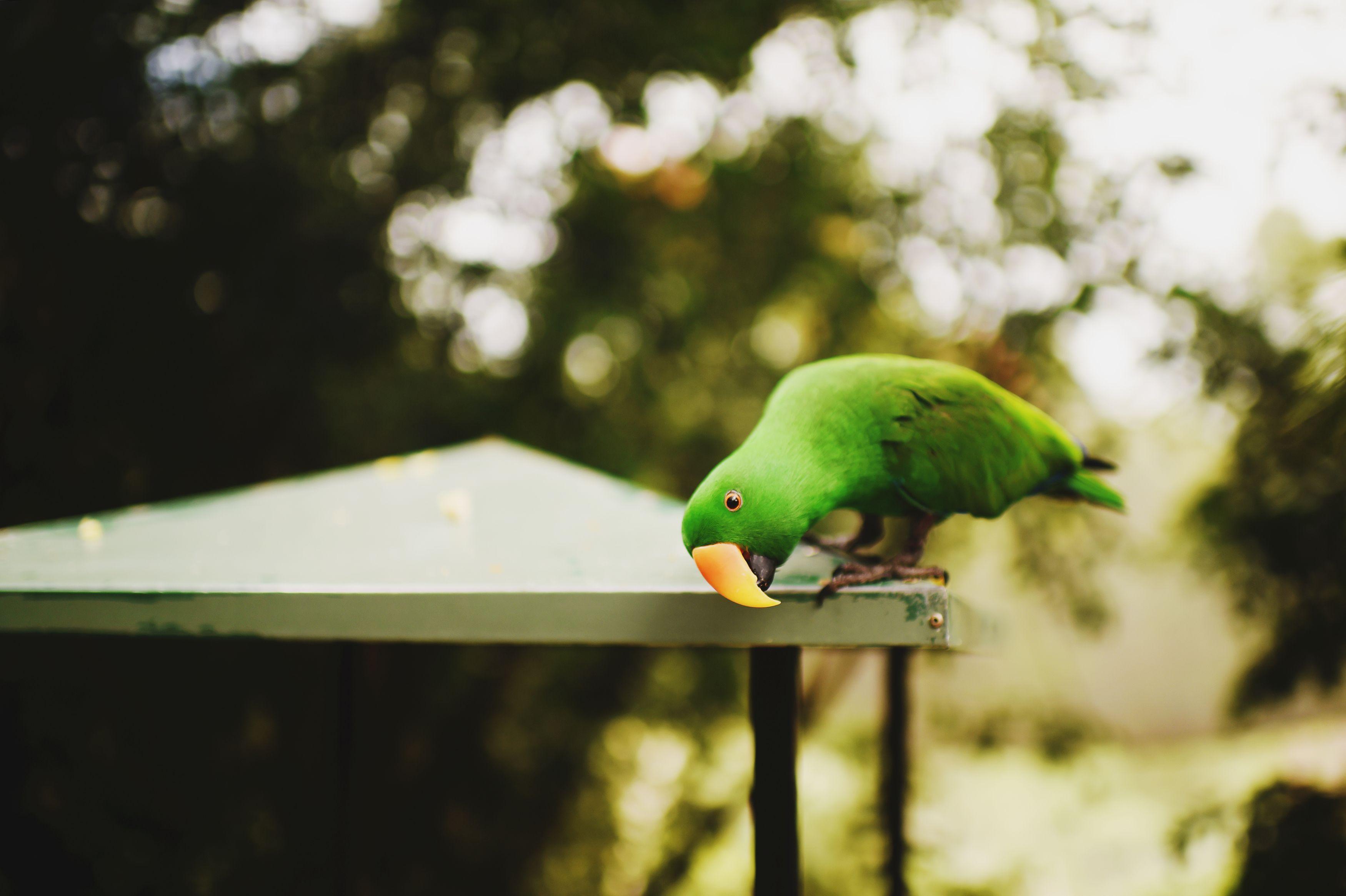Australia (Full Blog Post + Video) Stephanie Parsley Photography