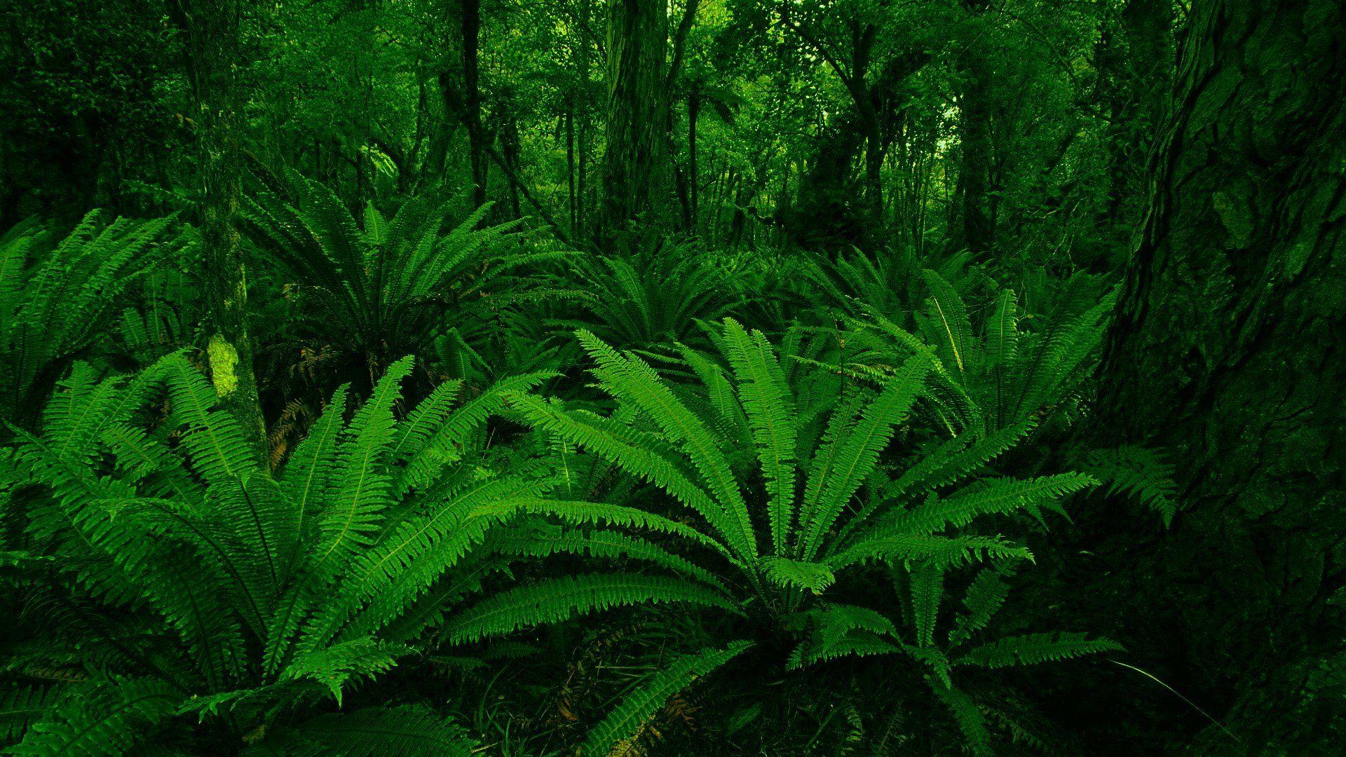 plants green leaf forest HD wallpaper Fern wallpaper