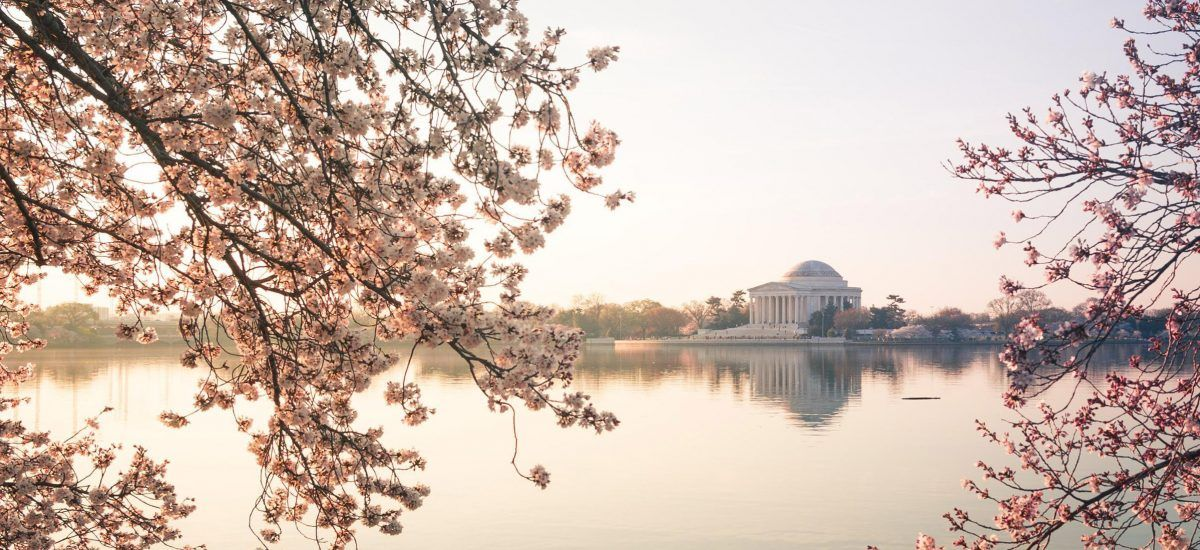 Guide To The National Cherry Blossom Festival In Washington Dc Washington Dc Cherry Blossom Washington Dc Cherry Blossom Festival Washington Dc Travel