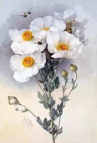 Pour Le Plaisir Des Yeux Peinture Fleurs Dessin Botanique