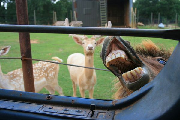 Funniest Animal Photobombs | Friday, March 26, 2010