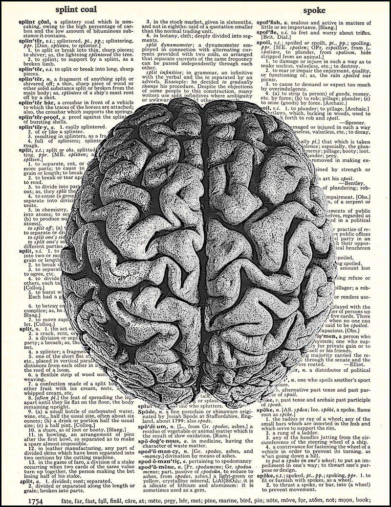 Anatomy Art Print Medical Brain Artwork Human Heart Art Brain Dictionary Art Print Human Skull Decor Set of 3 Prints