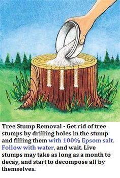 Epsom salt formula for stump removal stump removal tree stump and epsom salt formula for stump removal solutioingenieria Gallery