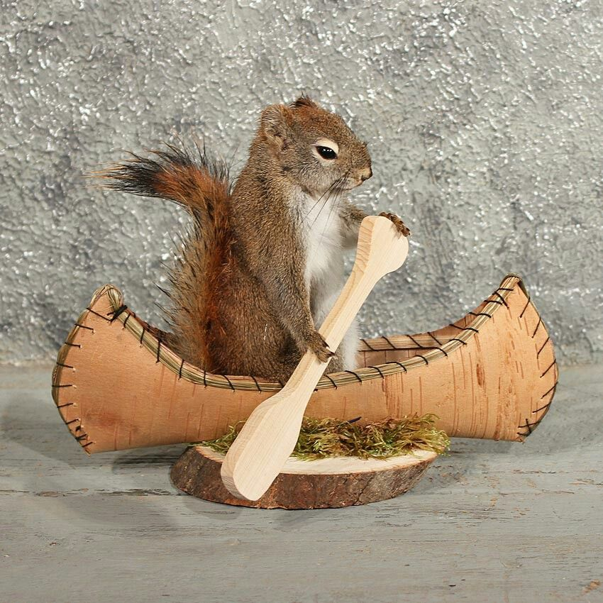 A Squirrel in the Canoe ...