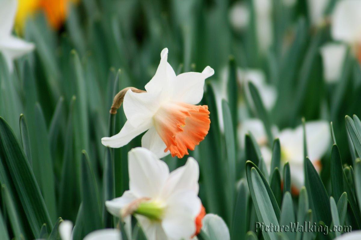 Hermosas Flores Flores Del Mundo Y Sus Nombres Buscar Con Google Botanical Gardens Botanical Narcissus