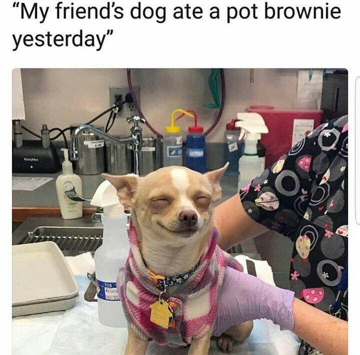 hell dog madness