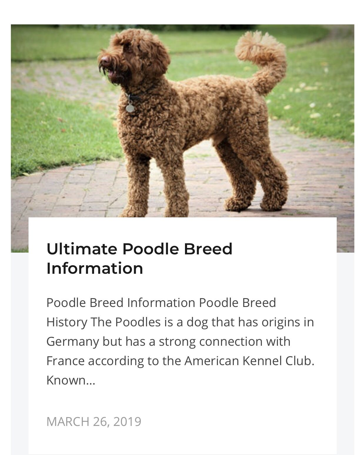 Ultimate Poodle Breed Information Poodle Puppy Training Poodle