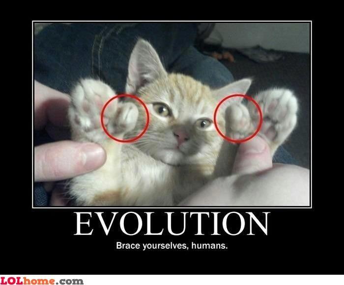 a2d04b32d5d36b09a084330bdbcd5827 flying cat meme google search ceiling cat buybull pinterest