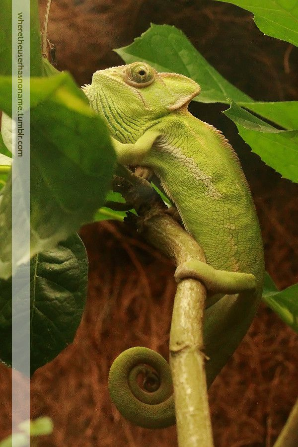 Karma Chameleon By Where The User Has No Names On 500px Karma Chameleon Chameleon Karma
