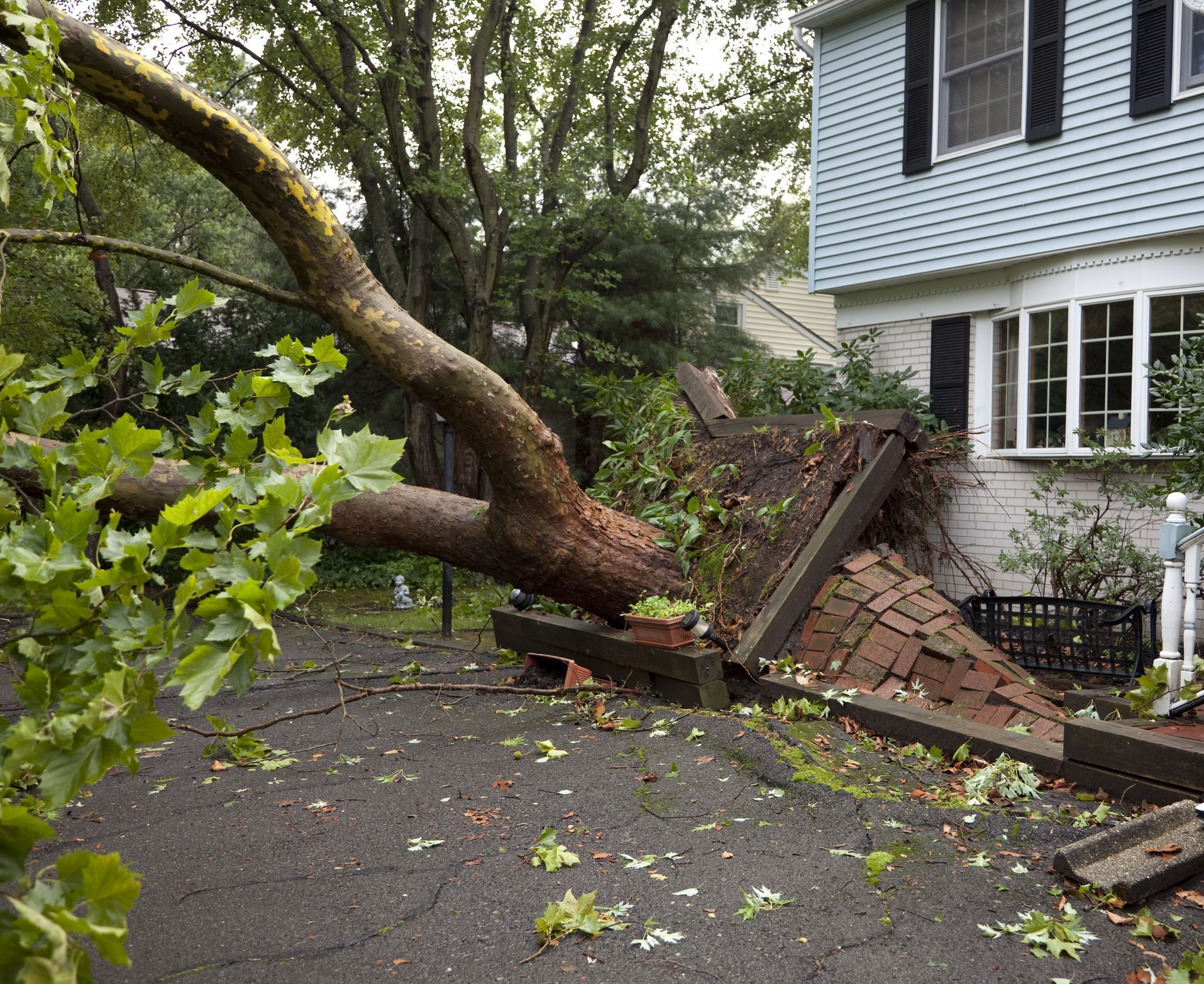 Fallen tree and tree damage claims whats covered and