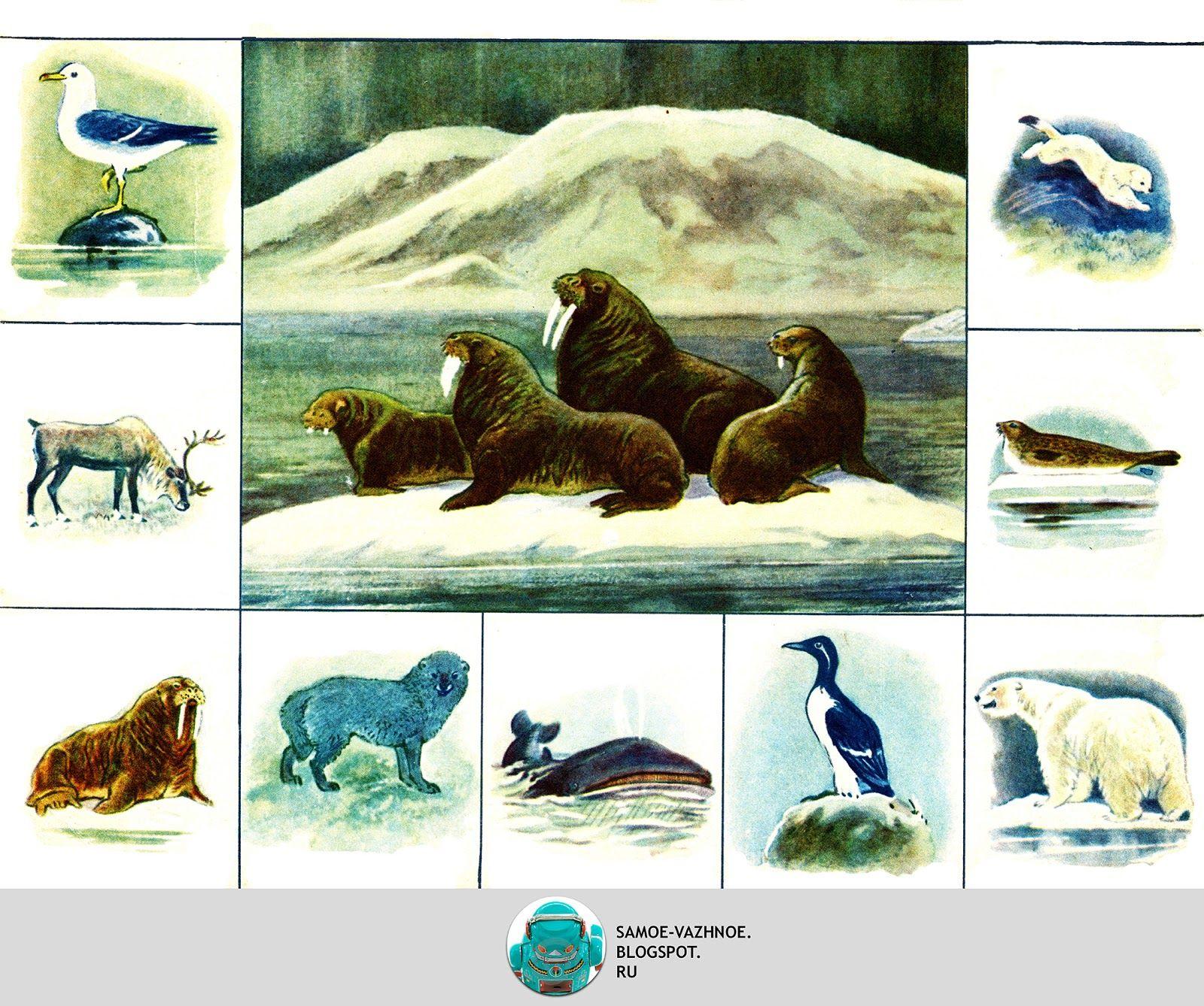 мадабе дидактические картинки животные севера красоты
