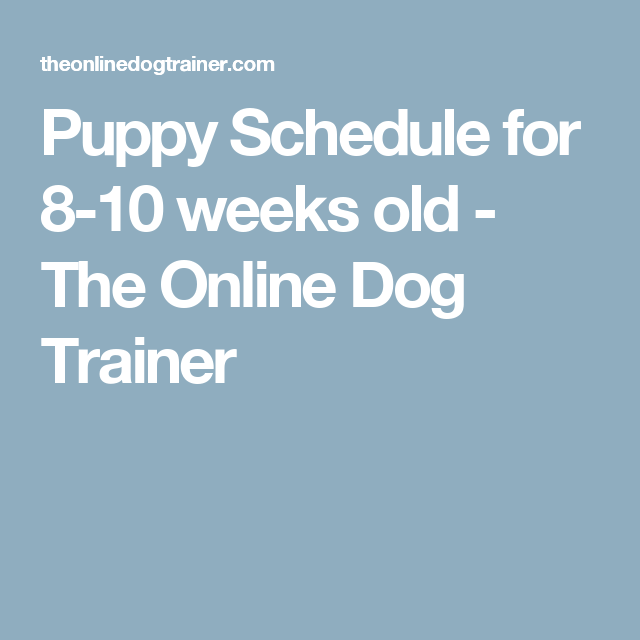 Puppy Schedule For 8 10 Weeks Old The Online Dog Trainer Tap The Pin For The Most Adorable Pawtastic Fur Puppy Schedule Puppy Training Schedule Dog Trainer