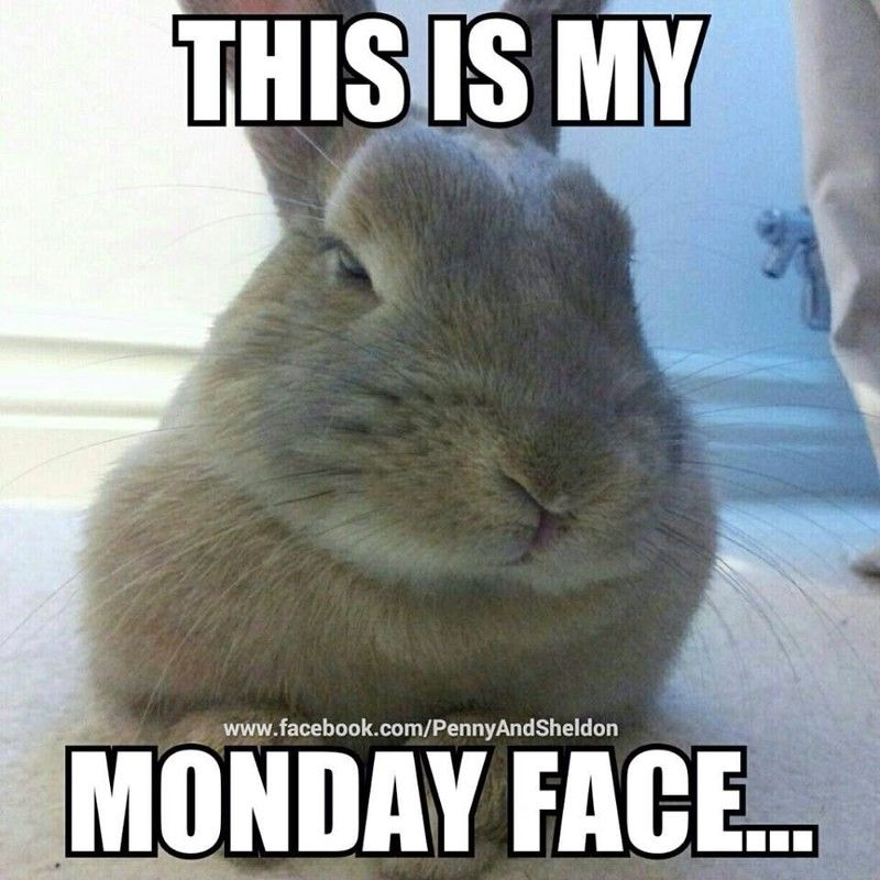 Monday Mood Good Morning Snoopy 67851 Funny Rabbit Funny Animal Pictures Funny Bunnies
