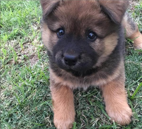 Gest Fluffiest Dog Breeds