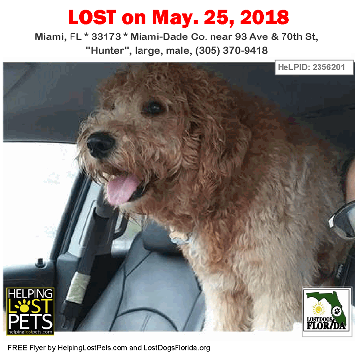 Have You Seen This Lost Dog He May Be With A Female Dog We Re