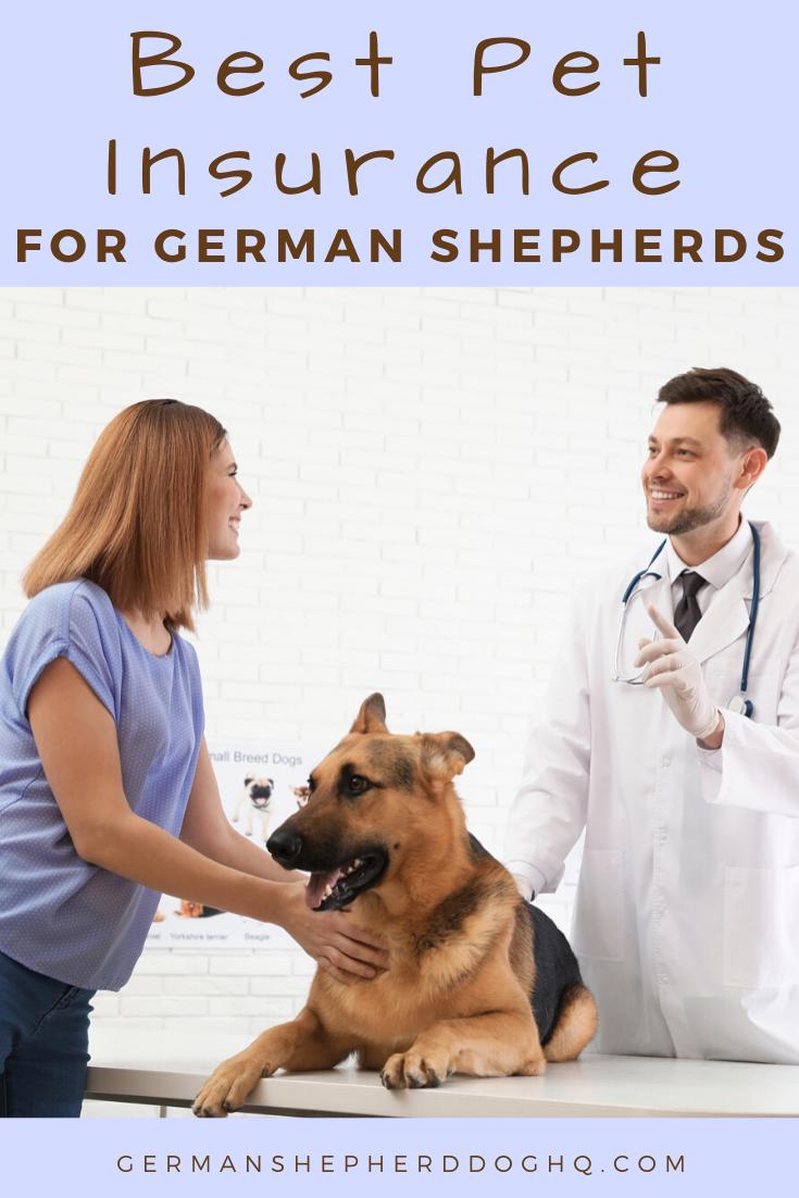 Best Pet Insurance For German Shepherds German Shepherd Dog Hq In 2020 Best Pet Insurance Embrace Pet Insurance German Shepherd Dogs