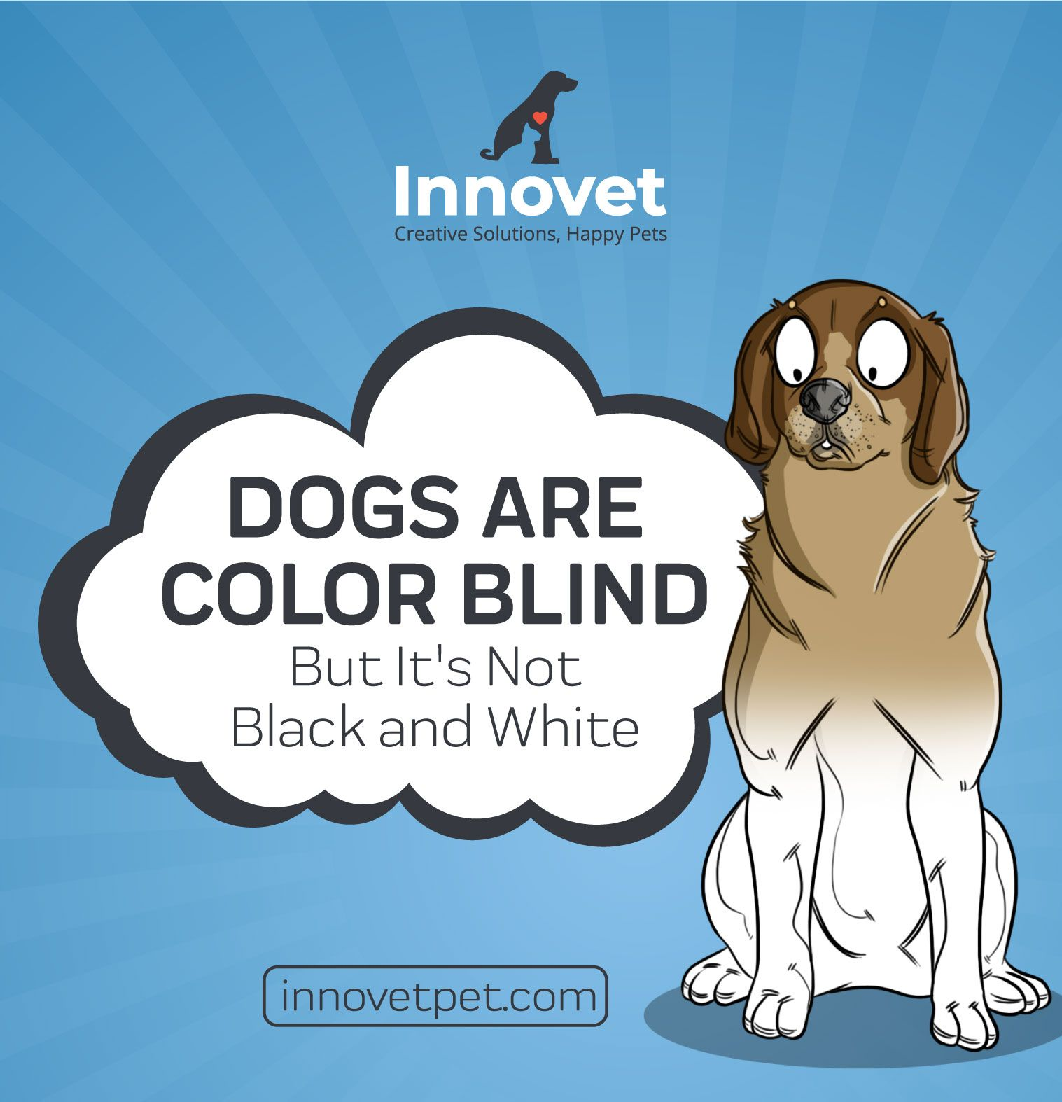 Tracerz Helping Blind Dogs Find Their Way in 2020