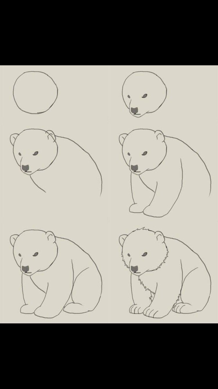Oso Polar Paso A Paso Sigueme En Instagram Rlaurarojas Doodle Drawings Drawings Bear Drawing