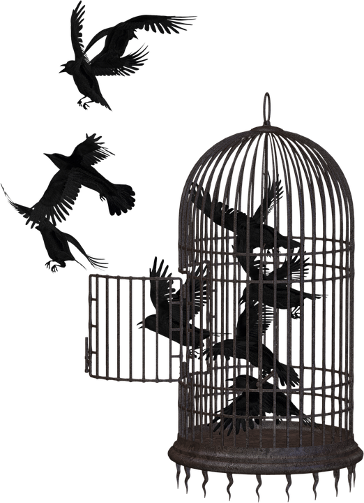 Bird Cage Png Image Bird Cage Cage Bird