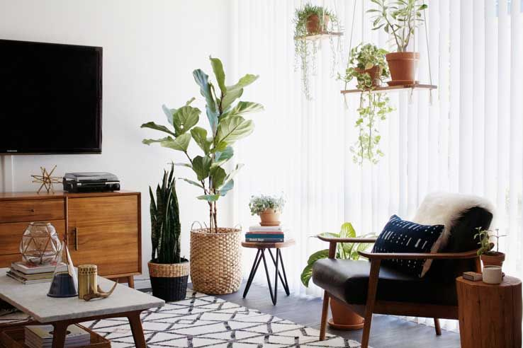 West elm new darlings living room before after for Modern living room plants