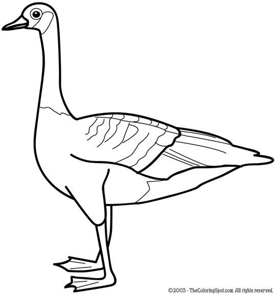 geese coloring pages for kids - photo#15