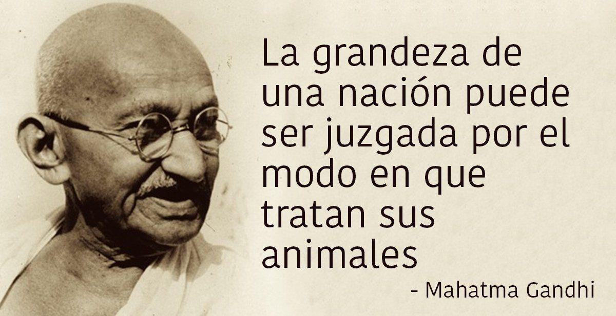 No Más Experimentos Con Animales En India Mahatma Gandhi