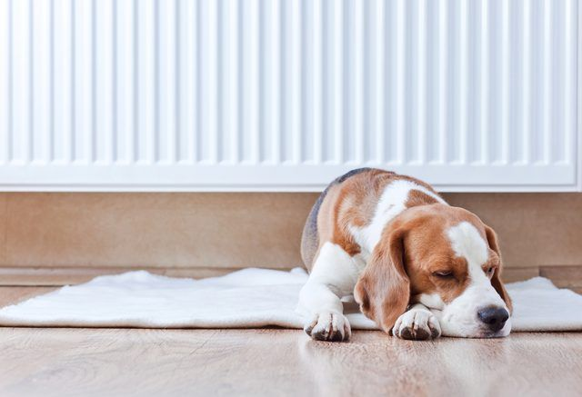 How To Clean Dog Urine From A Laminate Floor Bathrooms