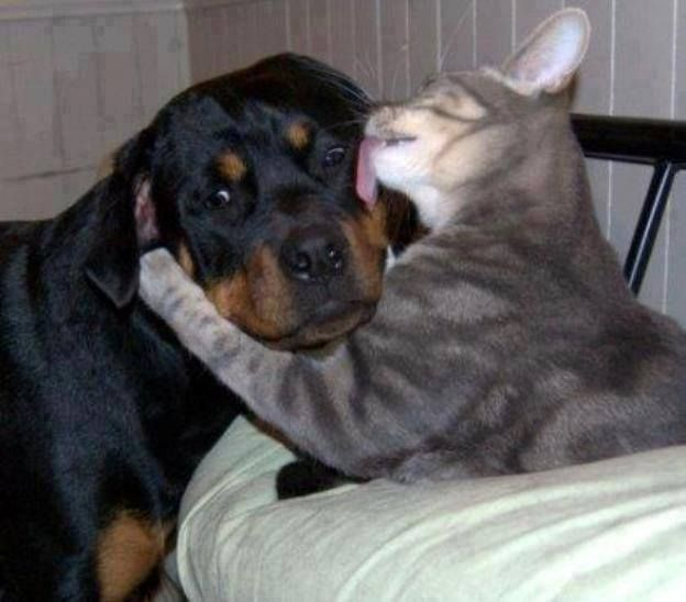 Funny Wildlife, I kissed a dog…and I liked it…!!!