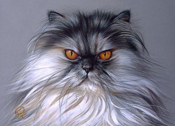 Elena Kolotusha Colored Pencil Goauche Persian Cat Drawing Persian Cat Color Pencil Art