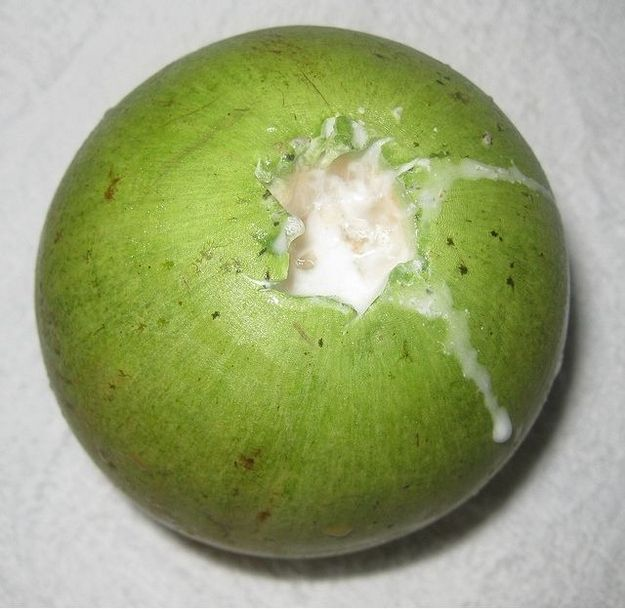 Star Apple, sometimes known as Breast Milk Fruit 20