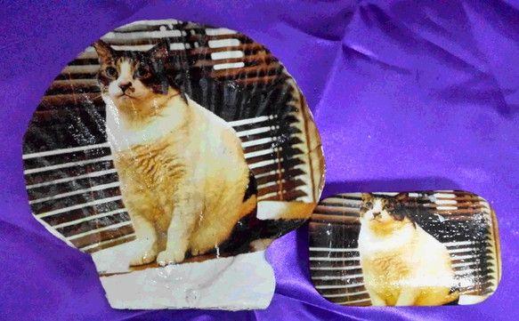 シェル小物入れ・石鹸付(猫A1-14)シェル 縦120 横130 石鹸 縦40 横80白い貝(シェル)と石鹸をデコパージュ、貝はアクセサリーや小物入れにしたり...|ハンドメイド、手作り、手仕事品の通販・販売・購入ならCreema。