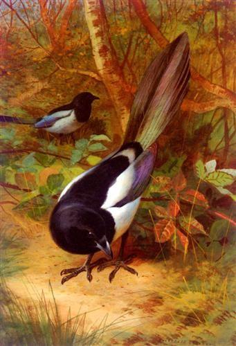 Magpies    Archibald Thorburn, 1905, Watercolour