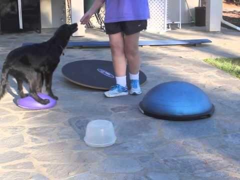 Susan Garrett S Recallers Online Dog Training Program Dog
