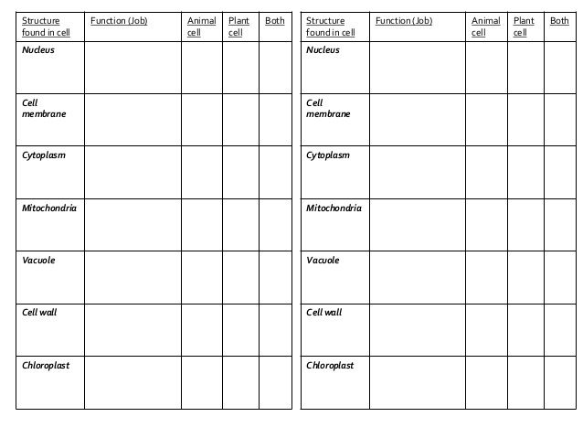 plant and animal cells not labeled Google Search – Comparing Plant and Animal Cells Worksheet