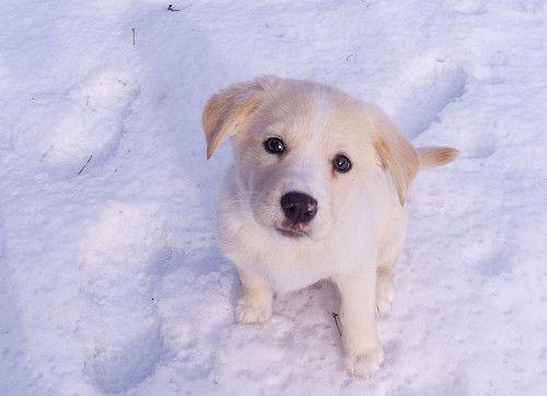 Эти забавные собаки - Снежок утипусечка