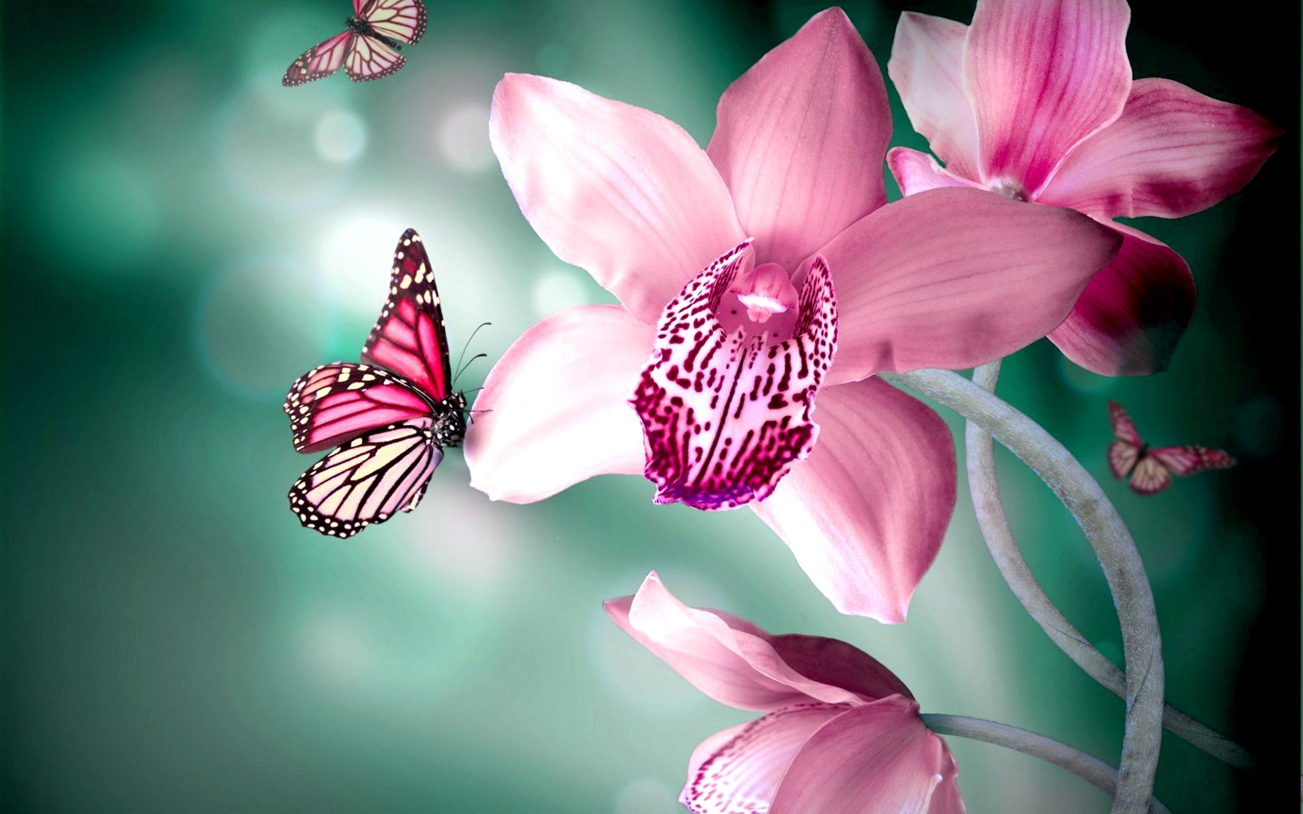 Orchid Tag wallpapers Pink Orchid Color Flowers Nature Scene