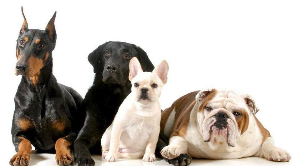 التأويلات الكاملة لتفسير رؤية الكلاب في المنام موقع مصري In 2021 Best Dog Breeds Dog Breeds Best Dogs