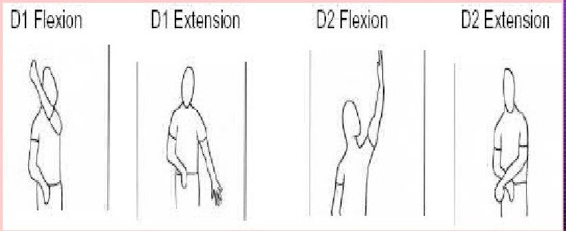 Pnf D1d2 Flexionextension Ot Board Exam Study Tools