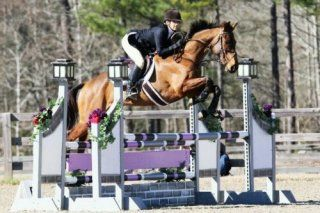 OTTB 's for sale for dressage, eventing, hunter/jumpers. Specializing in retraining thoroughbreds