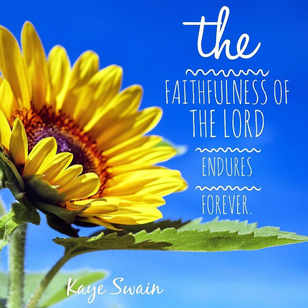 Have A Blessed And Beautiful Sunday Flowers Name In Hindi Sunflower Fields Sunflower